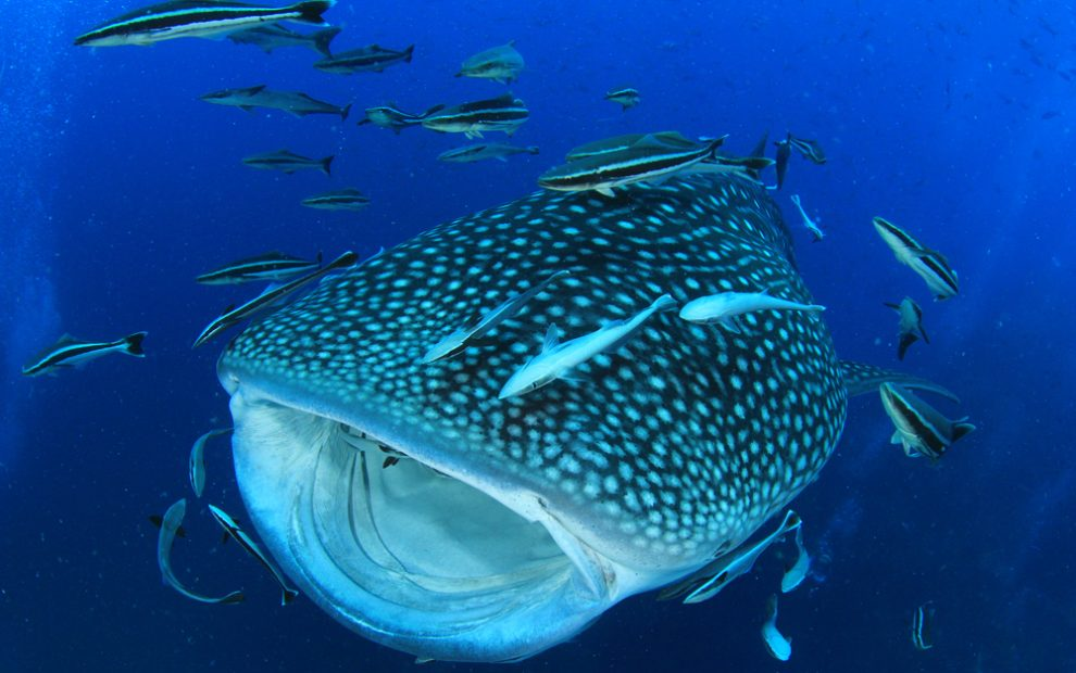 central-atolls
