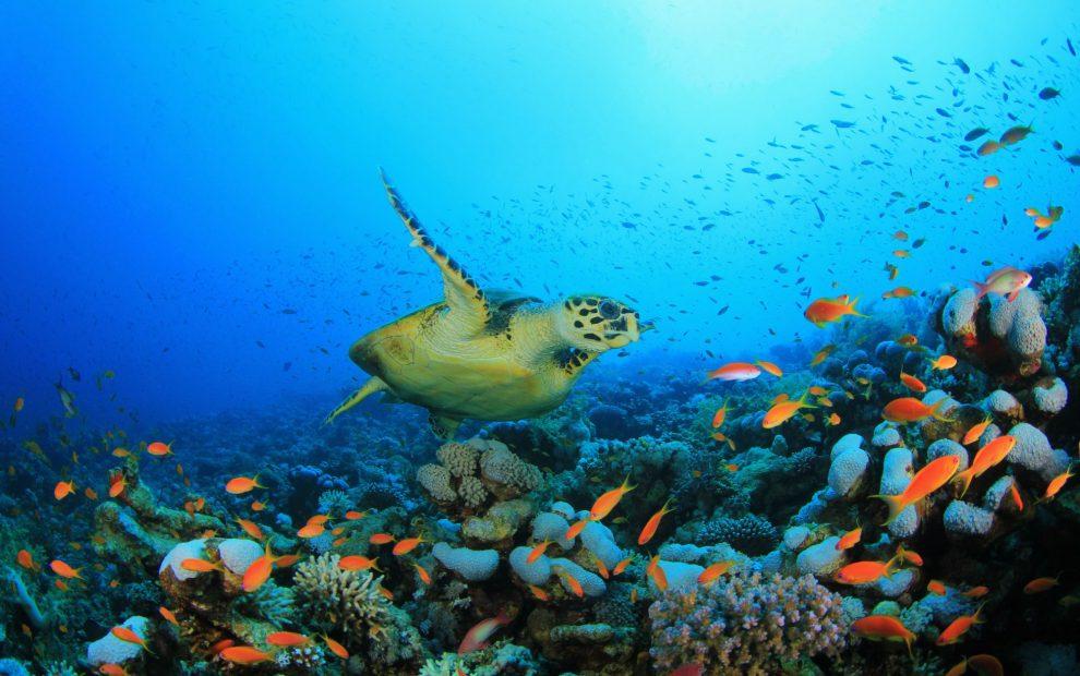 egypt-north-ras-mohammed-shark-yolanda-reef