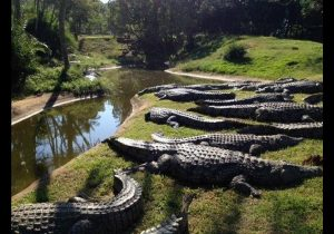 crocworld 1
