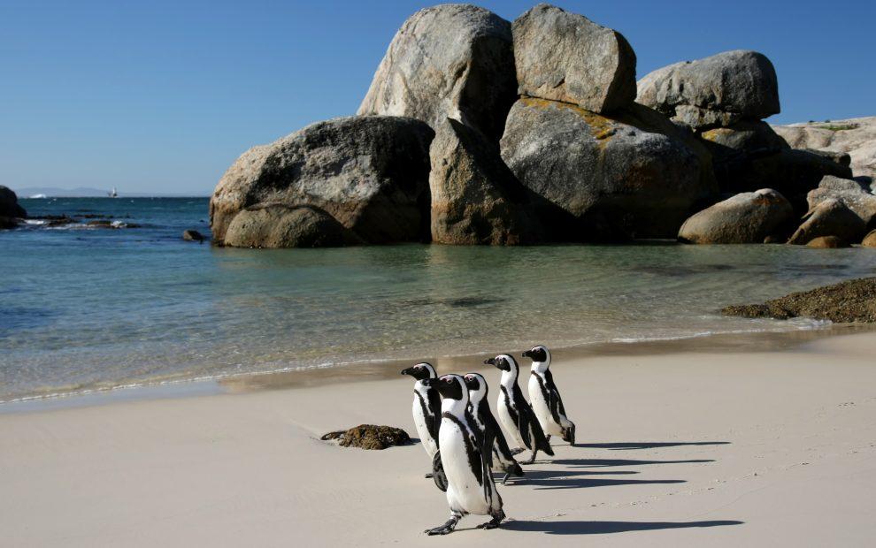 Пляж с пингвинами (Boulders Beach)