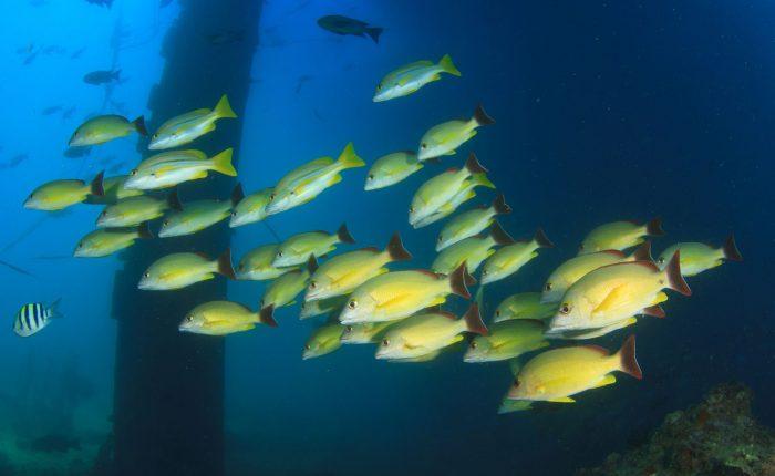 Thailand,Sea Chart Wreck