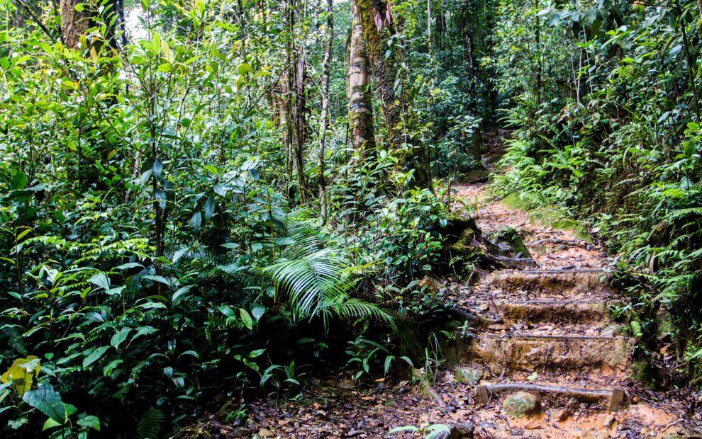 парк Кинабалу3